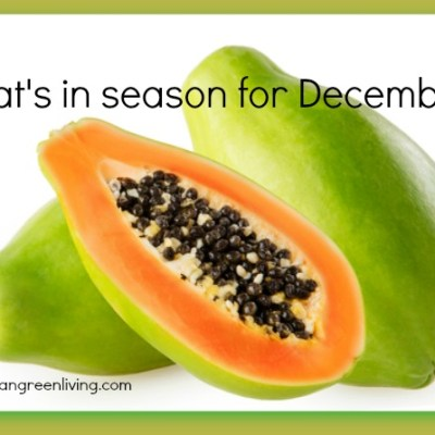 What's in Season this December