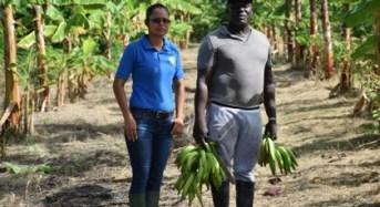 Black Sigatoka Management Programme effective