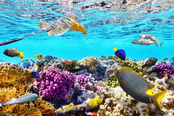 coral-reef-7401