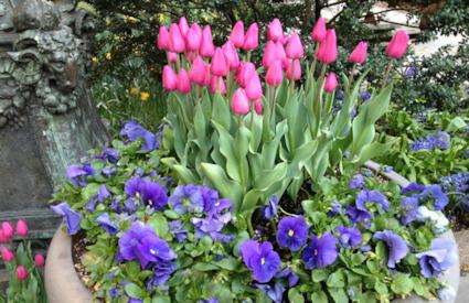 Bryant Park Spring Flowers