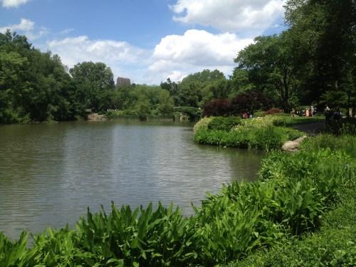 Central Park Turtle Pond
