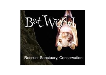 September Partner Spotlight: Bat World Sanctuary