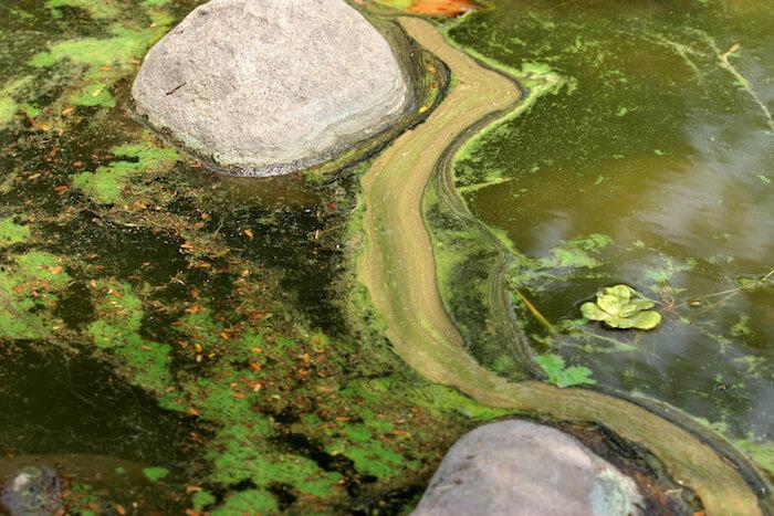 Garden Pond Cleaning