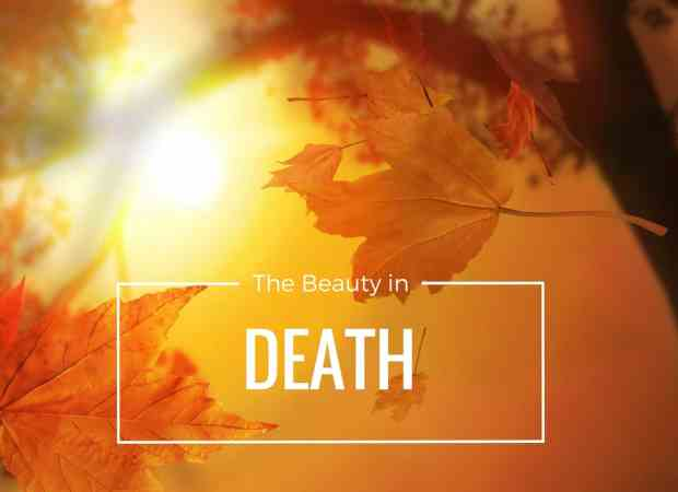 The Beauty in Death