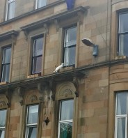 170617 Glasgow 3