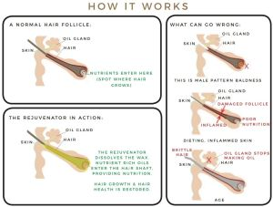 Carlie's Brow and Lash Rejuventor How It Works