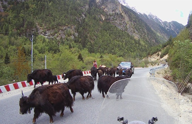 There are yaks everywhere along the road and you must be prepared to stop at any time.