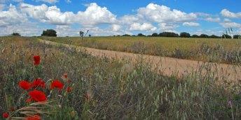 Páramos: Dehesas y campos de cereal