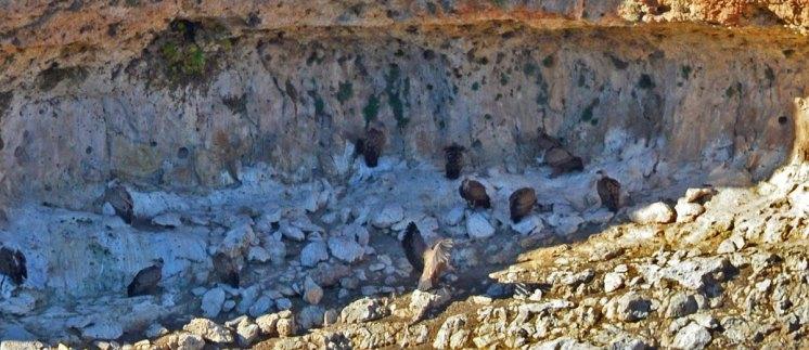 Buitreras de las cárcavas