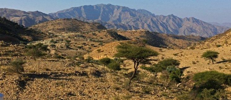 Las acacias predominan en un paisaje más árido a medida que perdemos cota