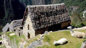 Machu Picchu. Llamas y Colcas