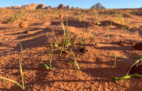 Brotes verdes en el desierto
