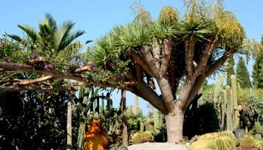 Jardines Ravino. Cactus, Tinaja y Drago