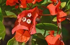 Hibiscos y orquídeas abundan en la isla
