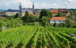 Viñedos en la colinas de Bamberg