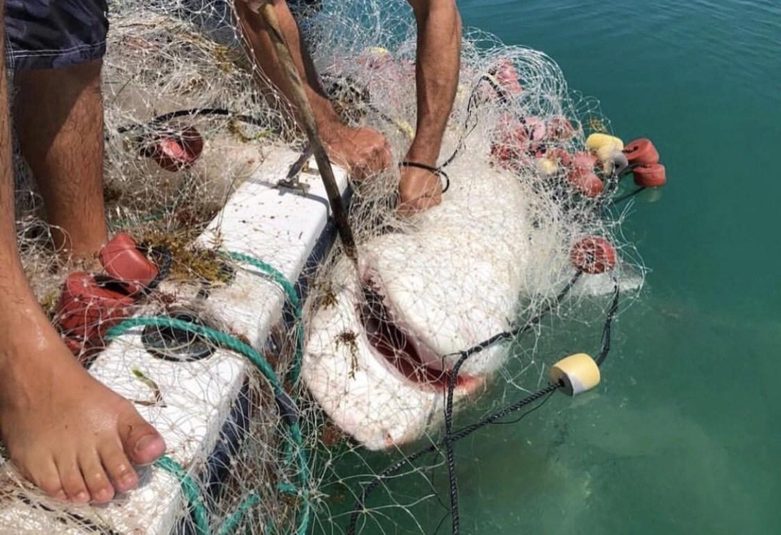 Las redes son el cáncer del mar.