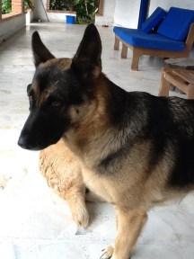 Lola en El Chaleco