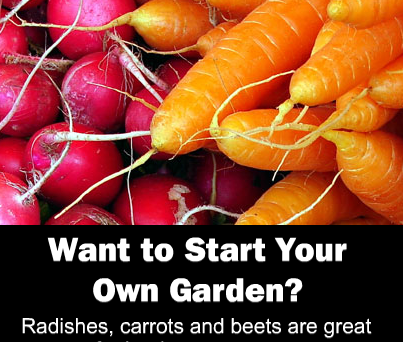 start your own organic garden with radishes, carrots and beets