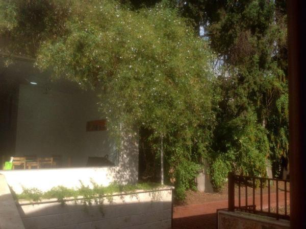 jardin_lattaquie (1)