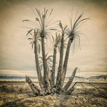Burnt Palms ©Ted Orland