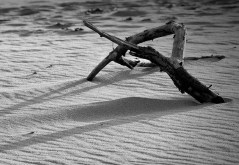 Sylvia Gardner, Drifting Shadows