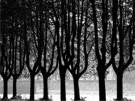 1985 Trees Lucca Italy
