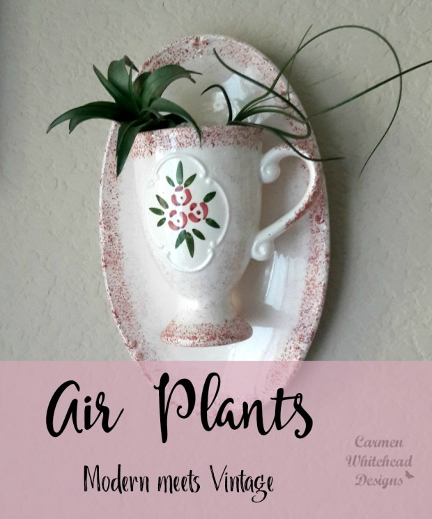 Air Plants: Vintage Meets Modern Style