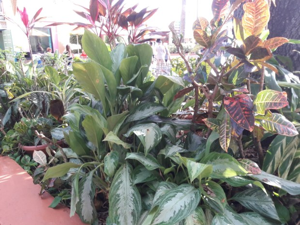 Tropical Florida Plants - Carmen Whitehead Designs
