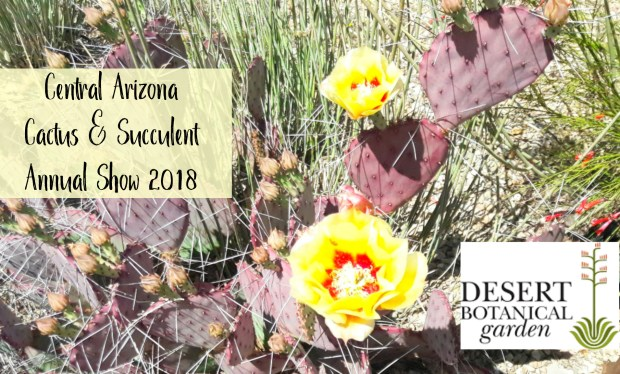 Cacti and Succulent Show Visit - Carmen Whitehead Designs