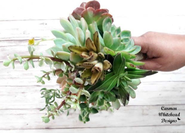 Succulent Bridal Bouquet by Carmen Whitehead Designs