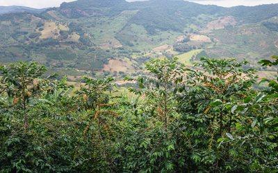 Sítio Santa Catarina