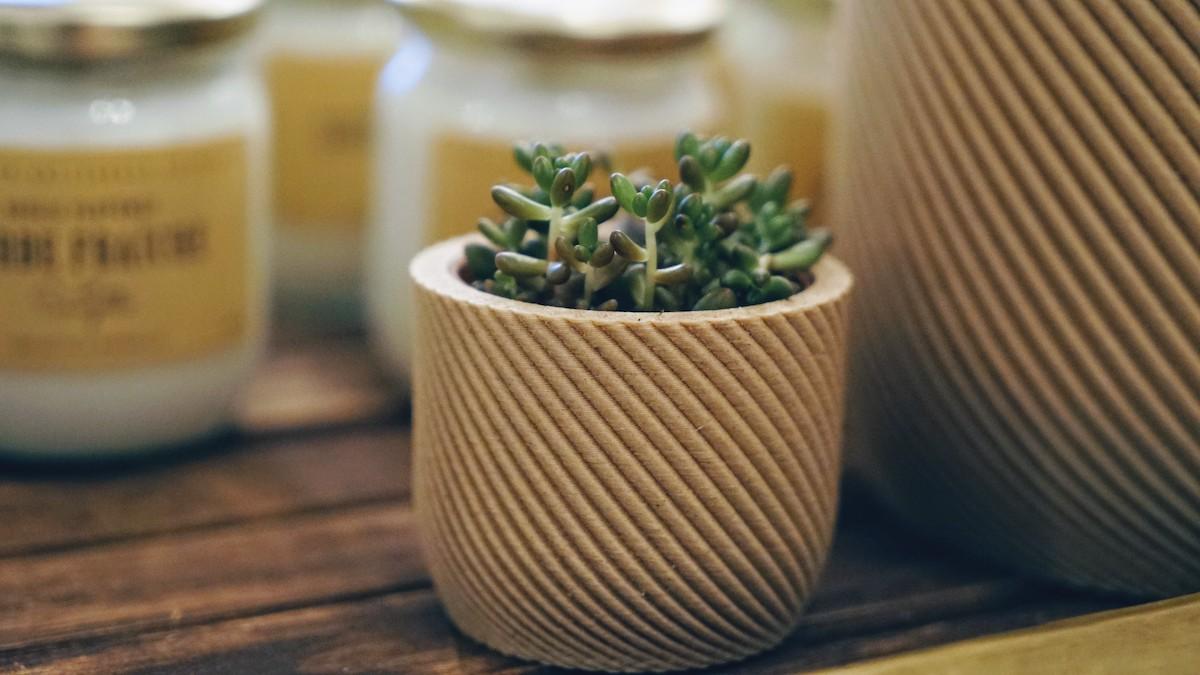 plante little liamone lyon