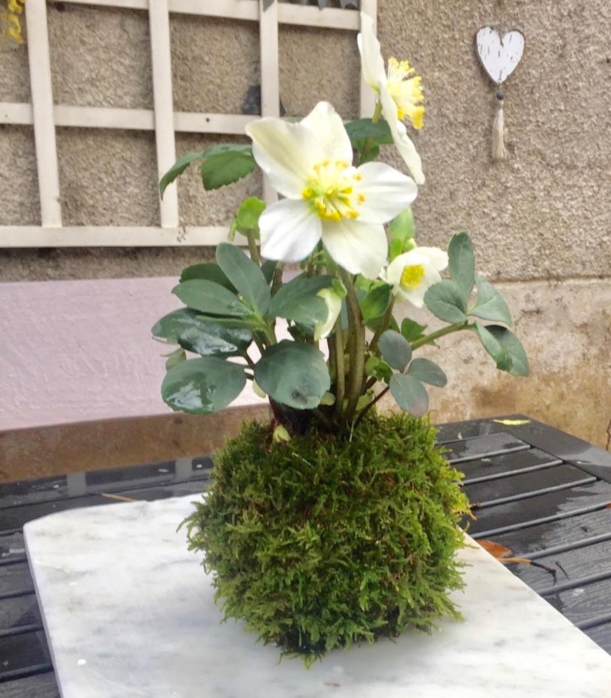 atelier à lyon kokedama avec une jonquille
