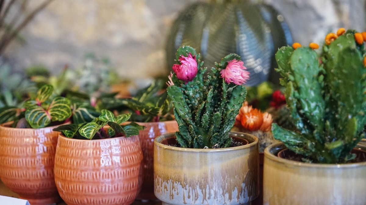 happy hours au bar a plantes little liamone