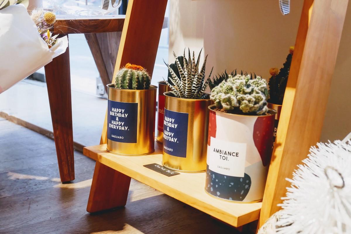 cactus dans des boîtes de conserve