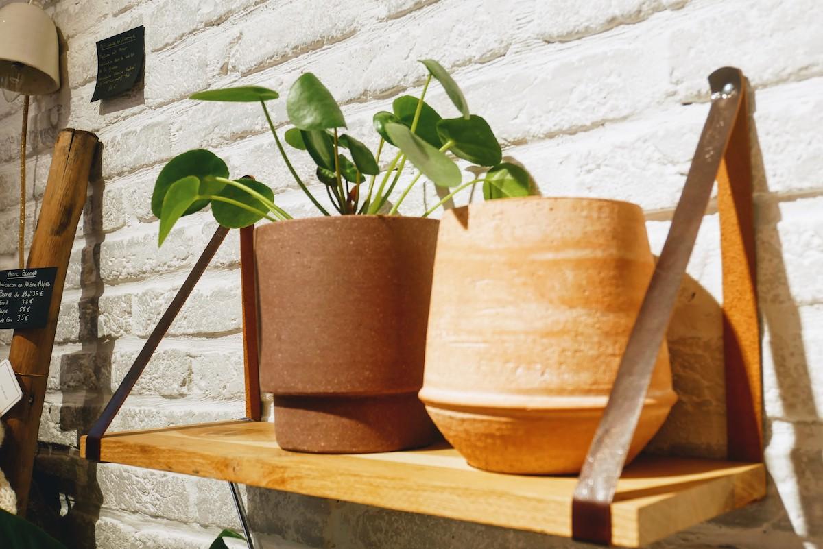 plante pilea