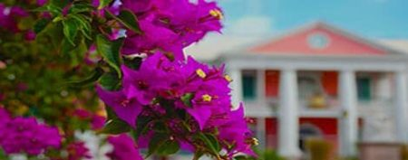 Cruises   Carnival Cruise Deals  Caribbean  Bahamas  Alaska  Mexico FLOWERS LOCATED IN FRONT OF A BUILDING IN THE BAHAMAS