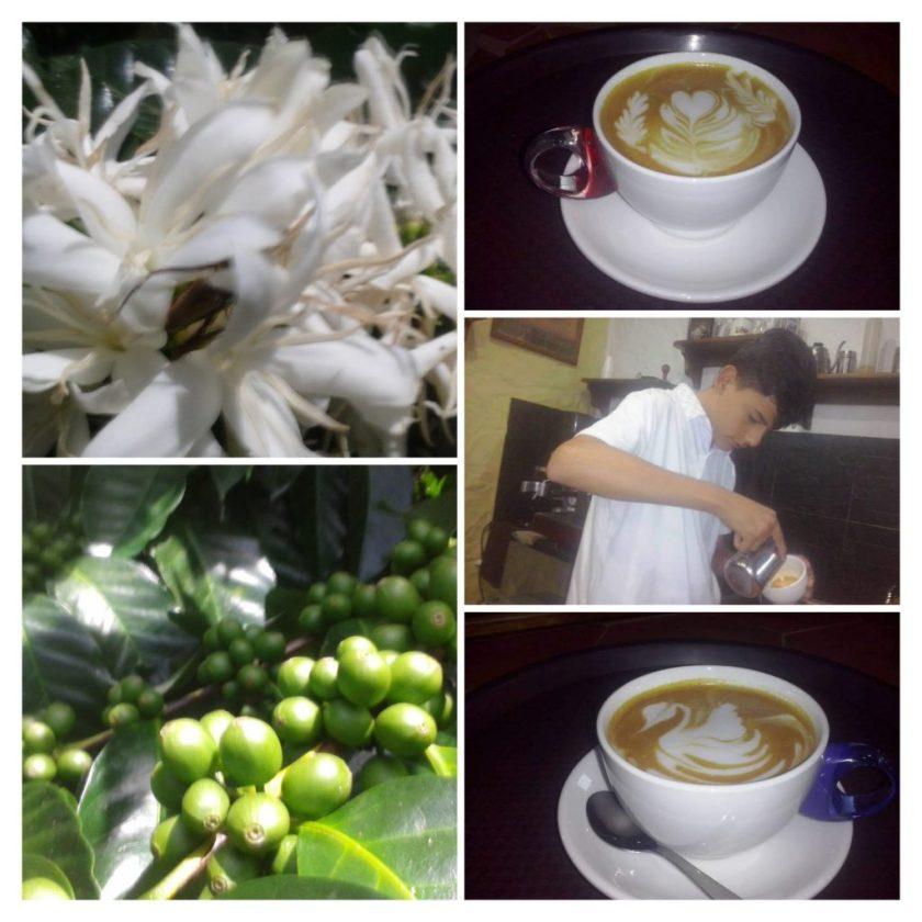 Caroai Café es cultura e historia