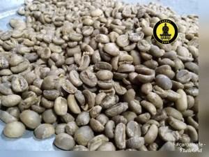 Cafe verde, también llamado en azul o café oro, en este estado se fija su precio como materia prima. Uno de los factores para conocer cuanto cuesta un kilo de café tostado.