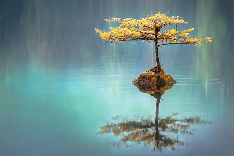 bioenergetica albero che si specchia in un lago
