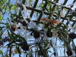 Show de Orquídeas