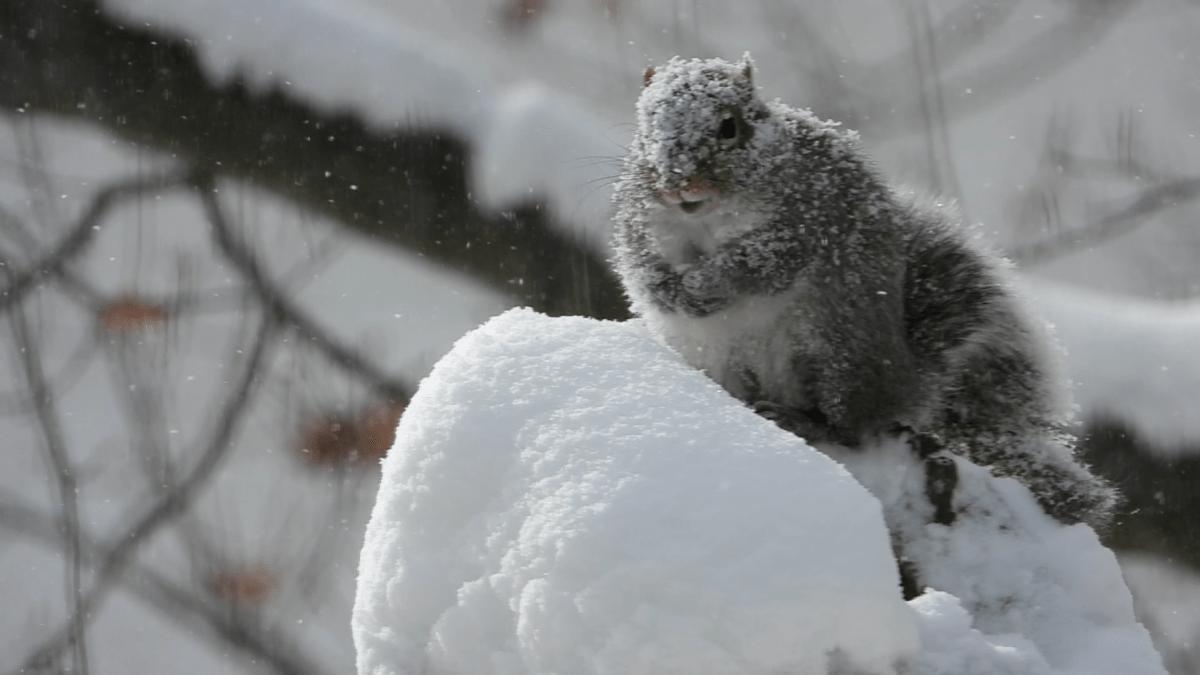 Snowstorm Soliloquy