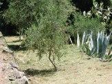 more_garden