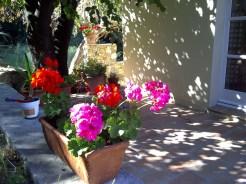 Summer Shade at the Olive farm