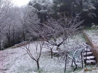 apples and beehives in the snow