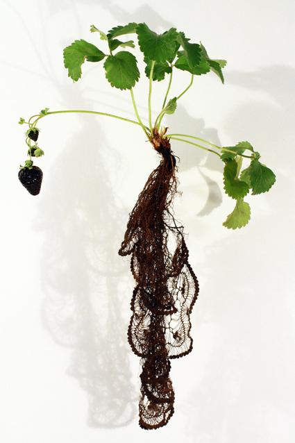 Strawberry Noir (Fragaria Fusca Tenebris)