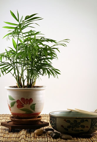 Plants that improve your indoor air quality| Greenville SC Indoor Air Quality
