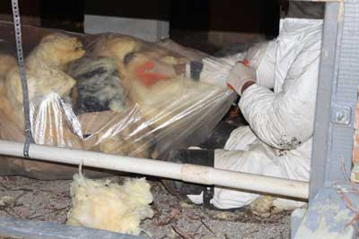 Cleaning up Mold in your home  Greenville SC