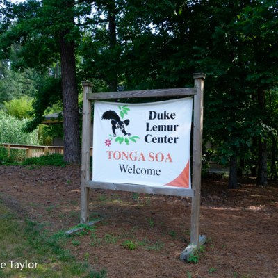 The Duke Lemur Center: A Visit