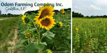 odom farming company
